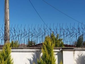 حفاظ شاخ گوزنی در رودهن-حفاظ بوته ای در رودهن